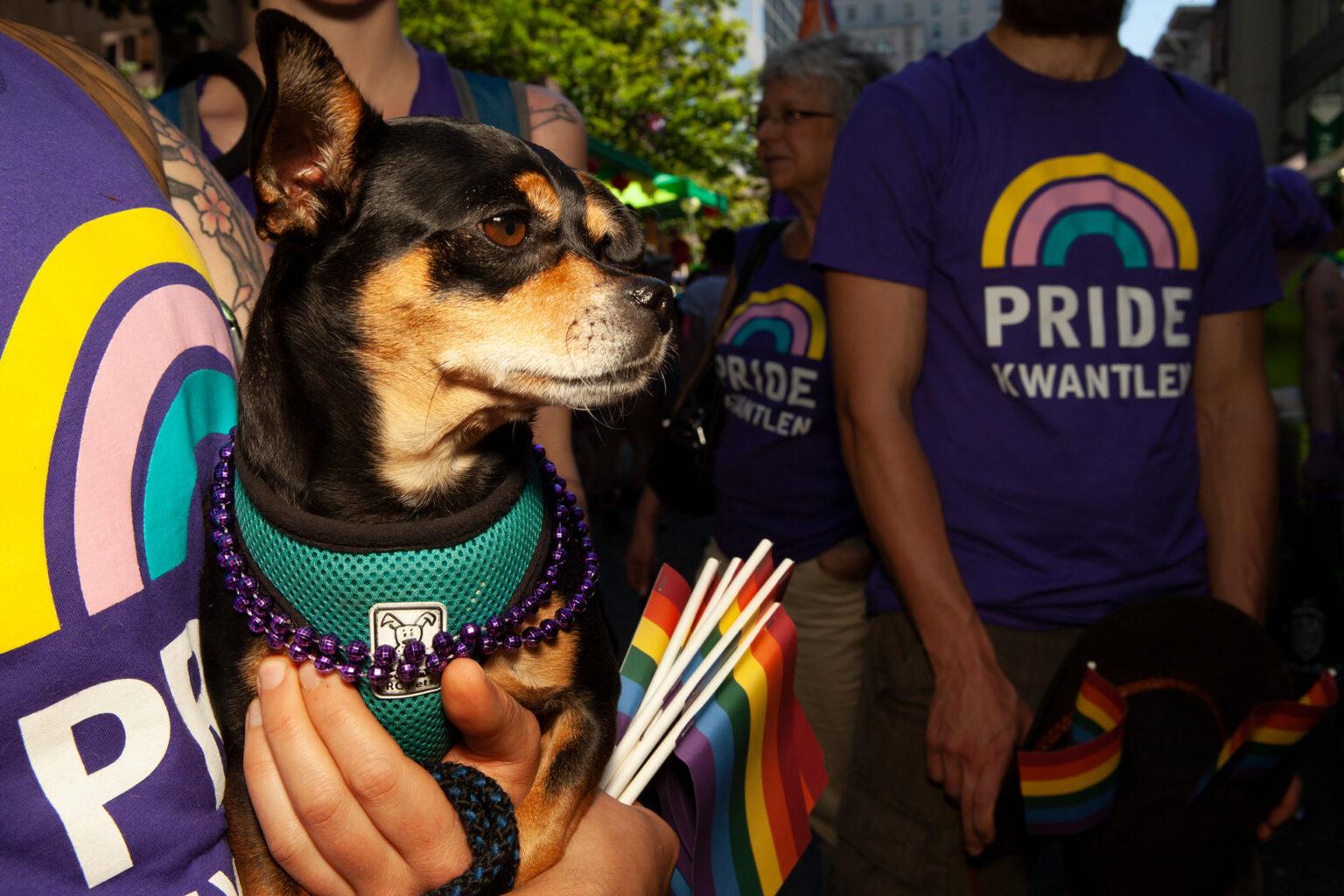 Rainbow dog, Vancouver Pride, Canada, 2014